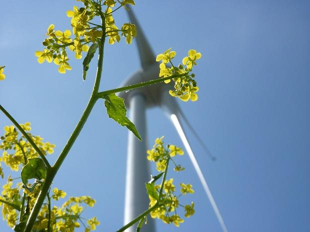 Naturstrom wind